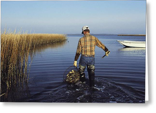 A Clam Digger Carries His Haul Greeting Card by Medford Taylor