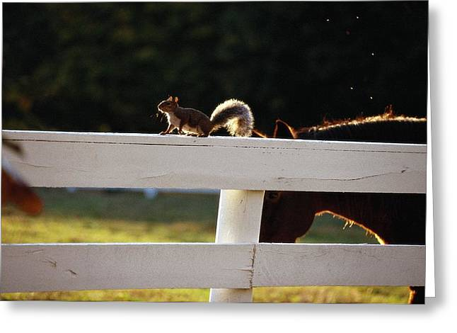 Best Sellers -  - Sciurus Carolinensis Greeting Cards - A Close View Of A Pastured Horse Greeting Card by Raymond Gehman