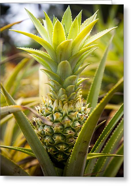 Ananas Greeting Cards - A Close View Of A Tainung Pineapple Greeting Card by Taylor S. Kennedy