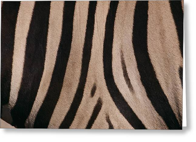 Close Views Greeting Cards - A Close View Of A Zebras Stripes Greeting Card by Michael Nichols