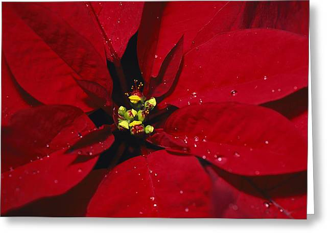 Plant Physiology Greeting Cards - A Close View Of Dew Drops Greeting Card by Nick Caloyianis