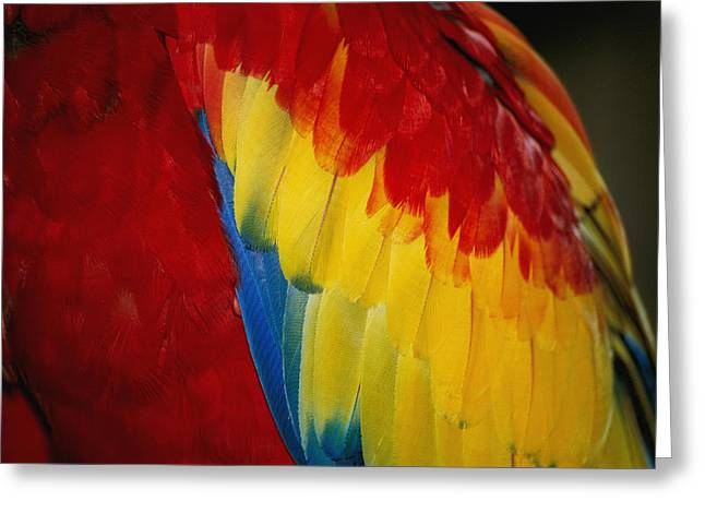 Alligator Farm Greeting Cards - A Close View Of The Bright Rainbow Greeting Card by Stephen St. John
