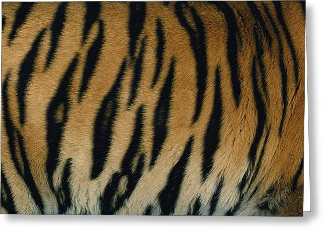 The Tiger Greeting Cards - A Close View Of The Patterned Skin Greeting Card by Michael Nichols