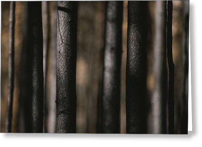 A Close View Of The Trunks Of Burned Greeting Card by Raymond Gehman