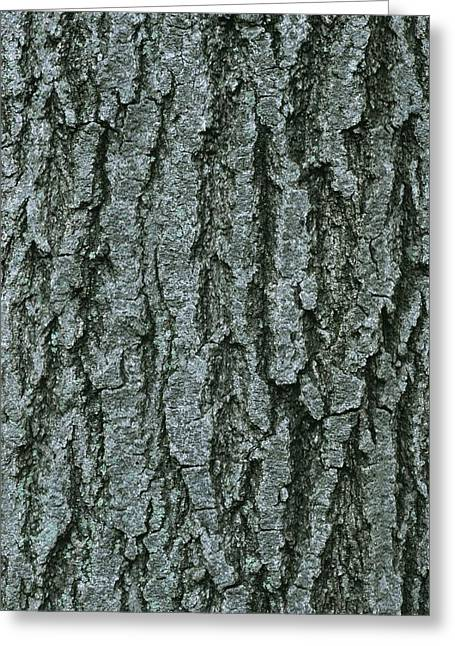 Patterns In Nature Greeting Cards - A Close View Of Tree Bark In Rock Creek Greeting Card by Taylor S. Kennedy