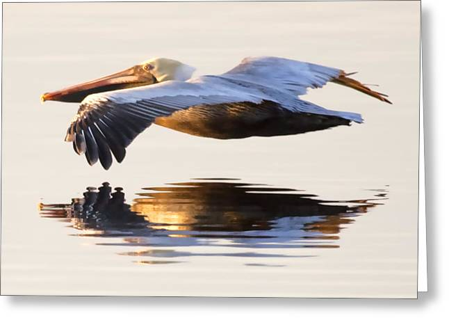 Pelican Greeting Cards - A Closer Look Greeting Card by Janet Fikar