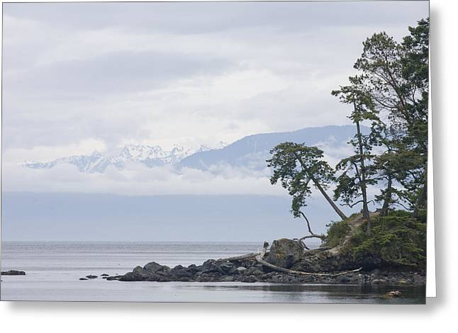 Shoreline Old Men Greeting Cards - A Cloudy Spring Day On Vancouver Island Greeting Card by Taylor S. Kennedy
