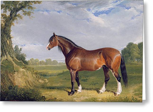 Frederick Photographs Greeting Cards - A Clydesdale Stallion Greeting Card by John Frederick Herring Snr
