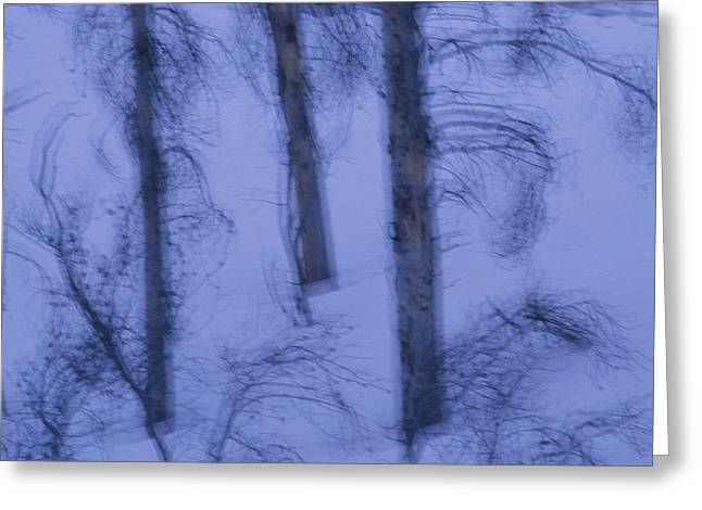 A Cold Wintry View Of Leafless Trees Greeting Card by Raymond Gehman