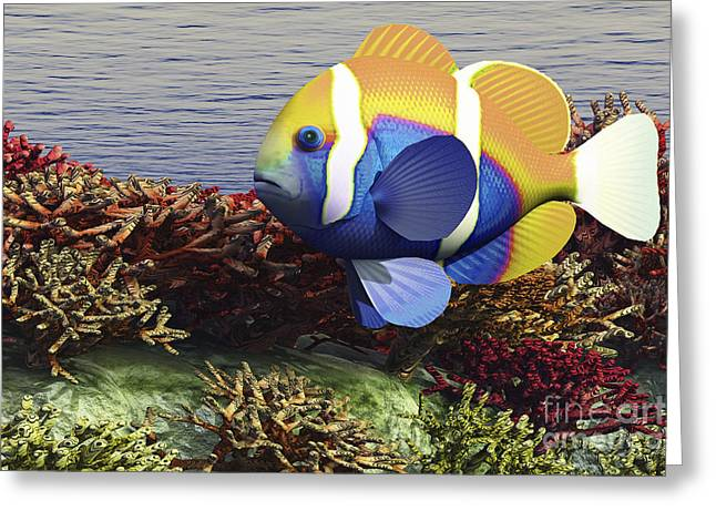 Reef Fish Digital Art Greeting Cards - A Colorful Clownfish Swims Among Greeting Card by Corey Ford