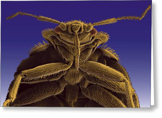 Microscopic Entities Greeting Cards - A Colorized Microscopic Image Greeting Card by Darlyne A. Murawski