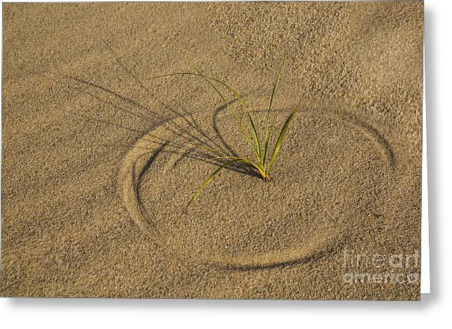 Best Sellers -  - Botanical Greeting Cards - A Compass in the Sand Greeting Card by Susan Candelario
