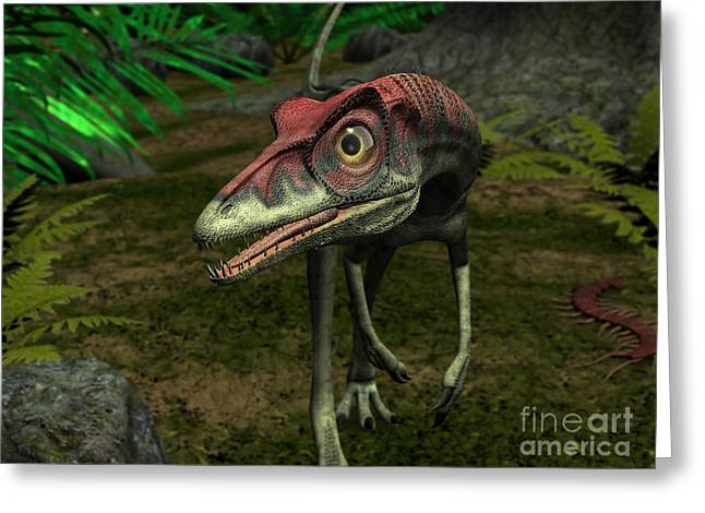 Saurischia Greeting Cards - A Compsognathus Wanders A Late Jurassic Greeting Card by Walter Myers