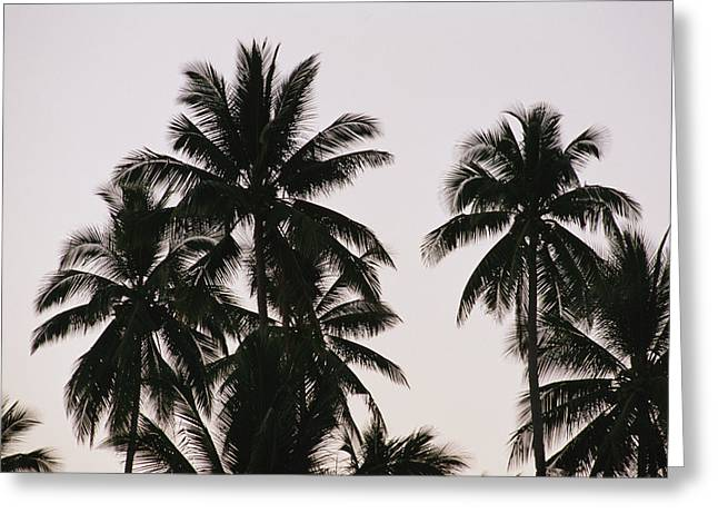 Light And Dark Greeting Cards - A Contrasty View Of Silhouetted Palm Greeting Card by Wolcott Henry