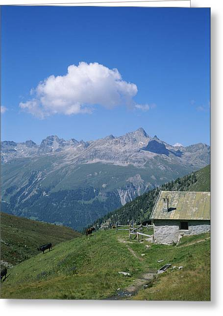 Dairy Farmers And Farming Greeting Cards - A Cow Herders Mountain Hut High Greeting Card by Taylor S. Kennedy