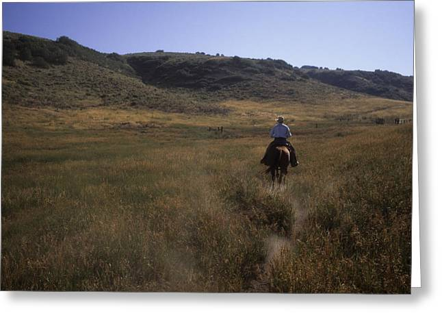 Steamboat Springs Greeting Cards - A Cowboy Looks For His Herd Greeting Card by Taylor S. Kennedy