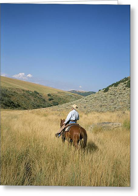Cowgirl And Cowboy Greeting Cards - A Cowboy Rides His Horse Looking Greeting Card by Taylor S. Kennedy