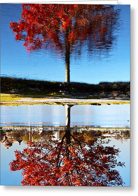 Babylon Greeting Cards - A Crazy Mixed Up Fall Greeting Card by Vicki Jauron