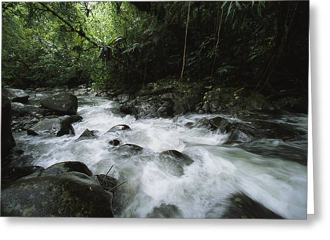 Woodland Scenes Greeting Cards - A Creek Rushing Through A Woodland Greeting Card by Tim Laman