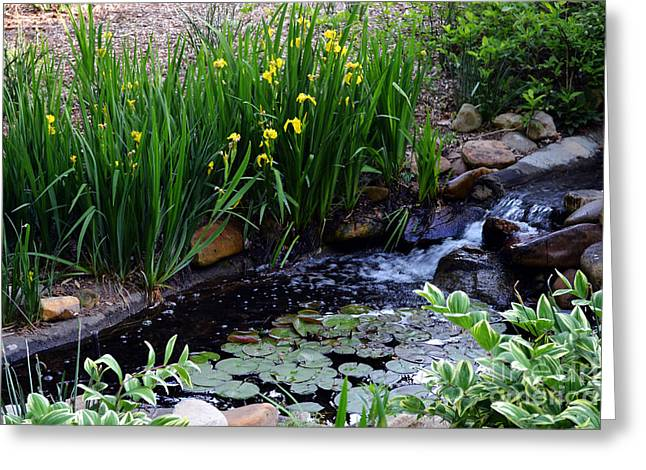 Lilly Pad Greeting Cards - A Creek Scene Greeting Card by Eva Thomas