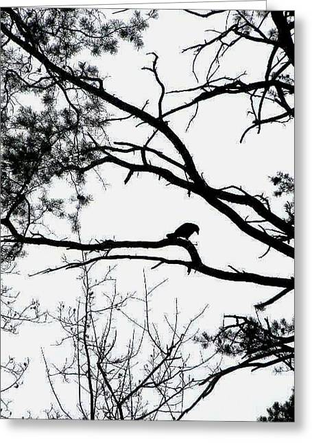 Nature Phots Greeting Cards - A crow shook down on me the dust of snow Greeting Card by Fareeha Khawaja