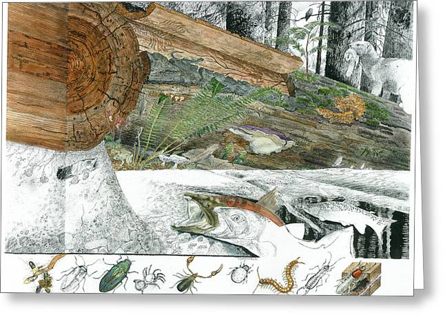 Douglas Fir Trees Greeting Cards - A Cutaway Painting Of The Ecosystem Greeting Card by Jack Unruh