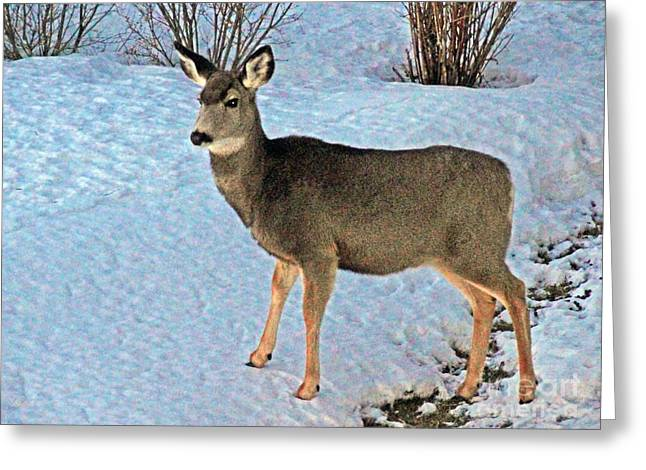Does. Winter Greeting Cards - A Deer Friend Greeting Card by Al Bourassa