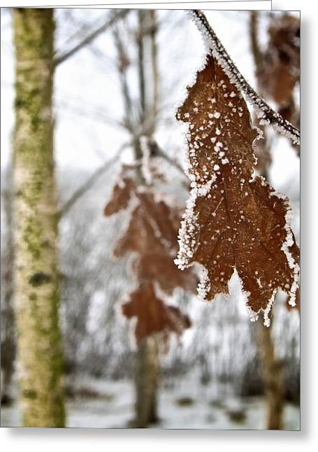 Wintry Photographs Greeting Cards - A Definite Chill Greeting Card by Odd Jeppesen