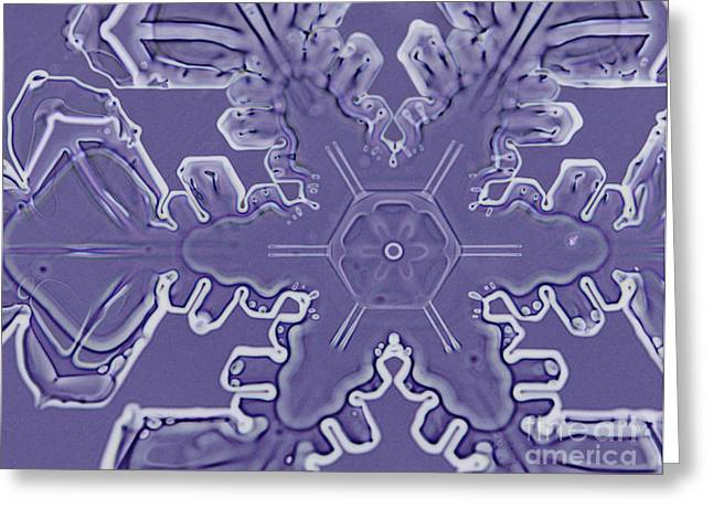 Radial Symmetry Greeting Cards - A Dendritic Snowflake Greeting Card by Ted Kinsman