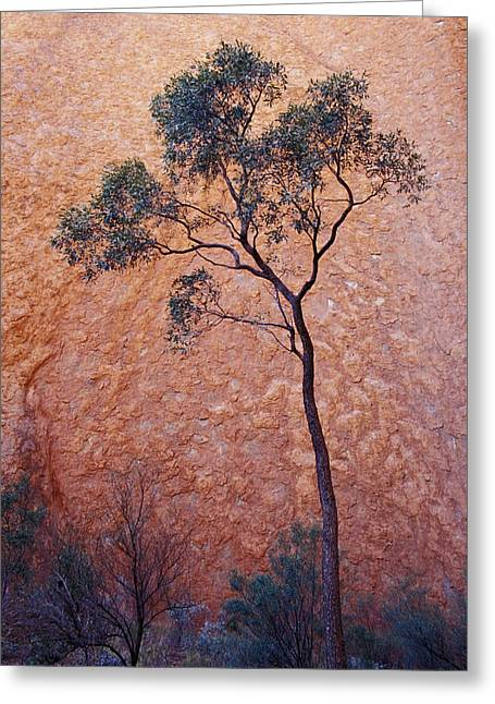 Monolith Greeting Cards - A Desert Bloodwood Tree Against The Red Greeting Card by Jason Edwards