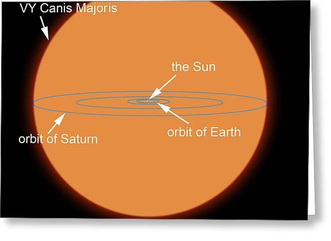 Large Scale Digital Art Greeting Cards - A Diagram Comparing The Sun To Vy Canis Greeting Card by Ron Miller