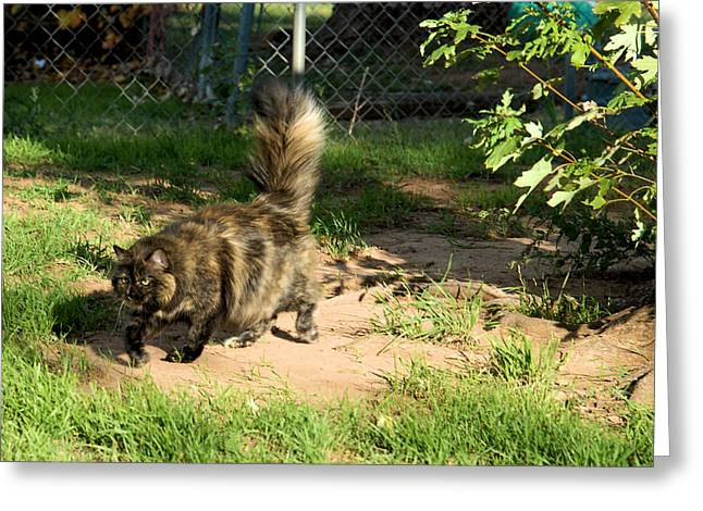 Photo Of Calico Cat Greeting Cards - A different Calico Cat Greeting Card by Cheryl Poland