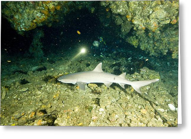 A Diver Exploring A Cavern Encounters Greeting Card by Tim Laman