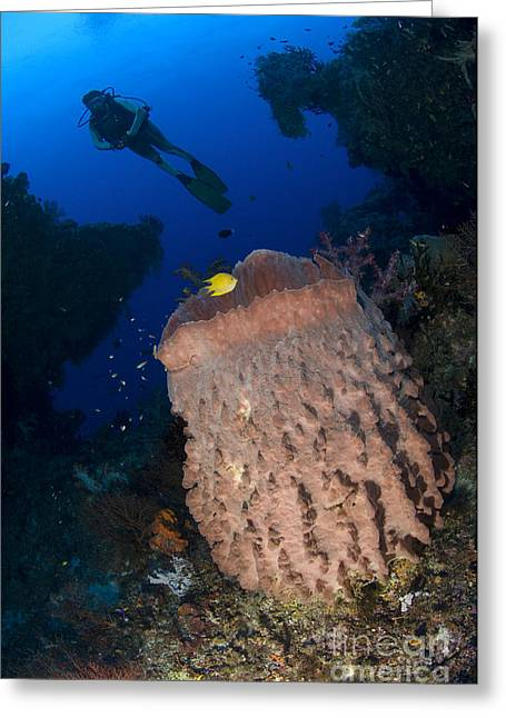 New Britain Greeting Cards - A Diver Looks On At A Giant Barrel Greeting Card by Steve Jones
