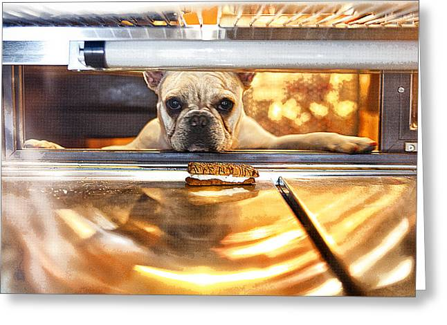 Dog Images Greeting Cards - A Dog and His Cookie Greeting Card by Susan Stone