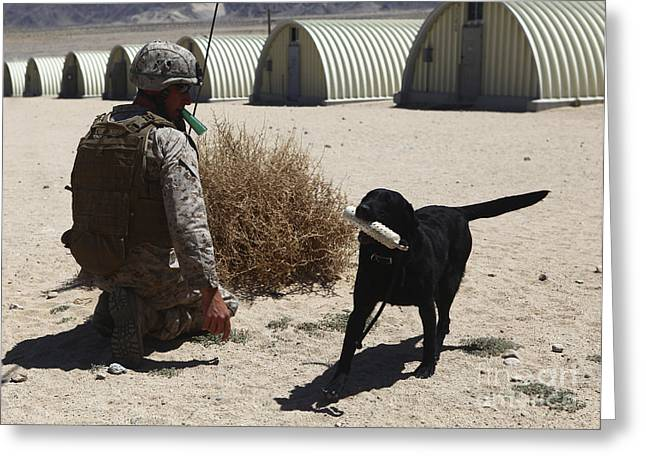 Working Dog Greeting Cards - A Dog Handler Calls Over A Black Greeting Card by Stocktrek Images