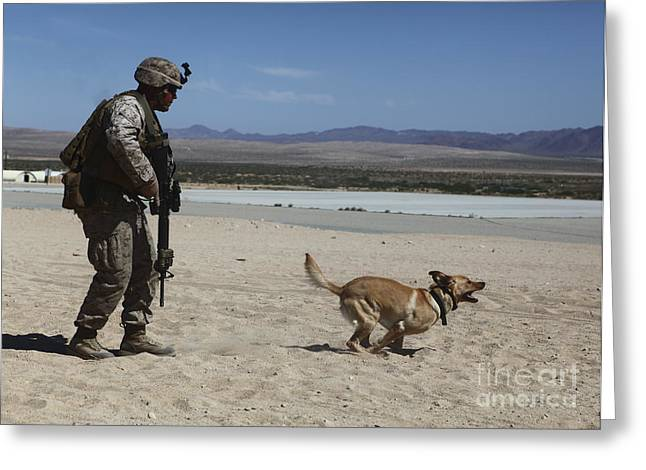 Working Dog Greeting Cards - A Dog Handler Conducts Improvised Greeting Card by Stocktrek Images