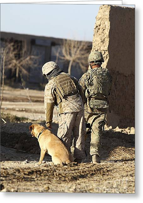 Working Dog Greeting Cards - A Dog Handler Takes Care Greeting Card by Stocktrek Images