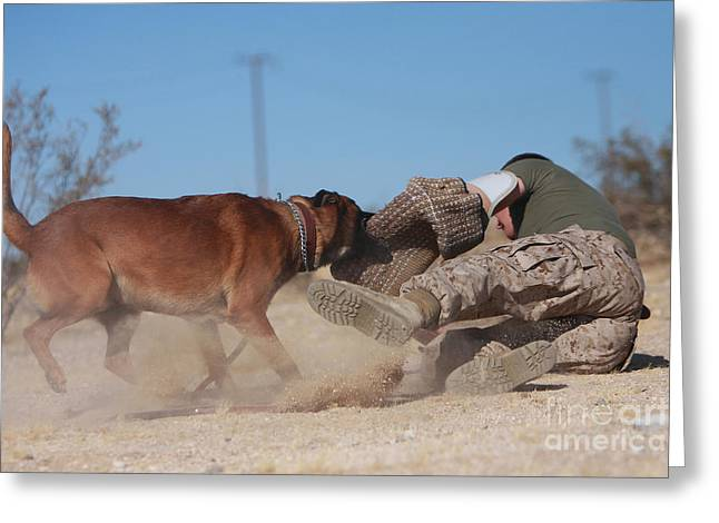 Working Dog Greeting Cards - A Dog Handler Works On Take-down Greeting Card by Stocktrek Images