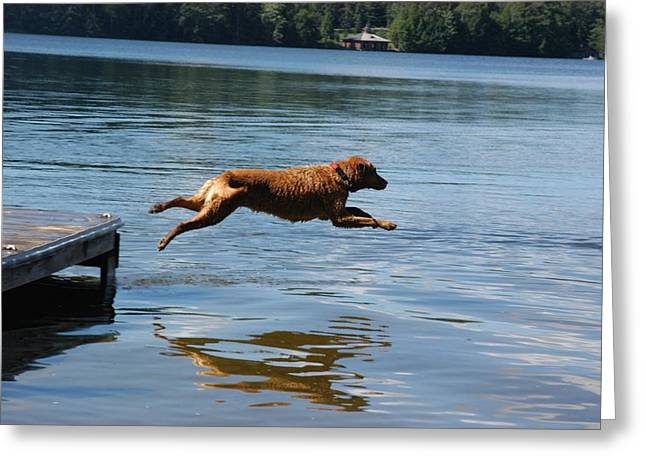 Dog In Lake Greeting Cards - A Dog Jumps Into A Lake Chasing A Ball Greeting Card by Stacy Gold