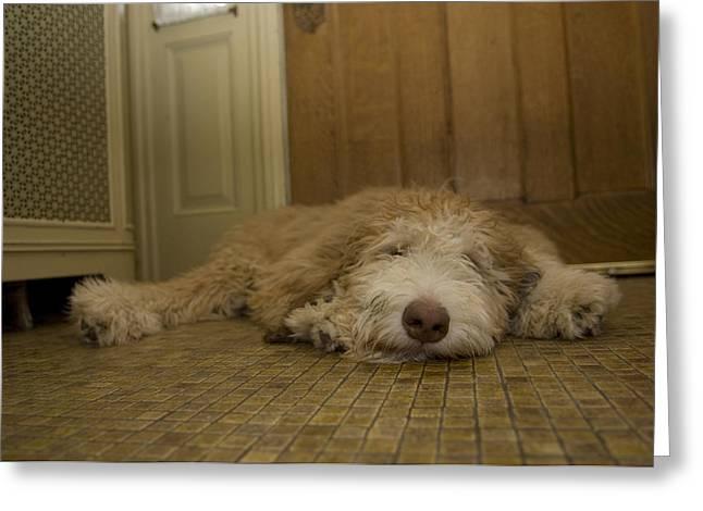 A Dog Lies On A Linoleum Floor Greeting Card by Joel Sartore
