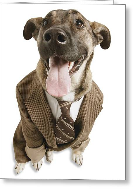 Absurd Surreal Greeting Cards - A Dog With A Suit Greeting Card by Don Hammond