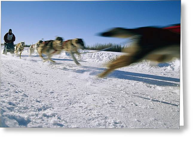 Panned Views Greeting Cards - A Dogsled Team Whizzes Past The Camera Greeting Card by Maria Stenzel