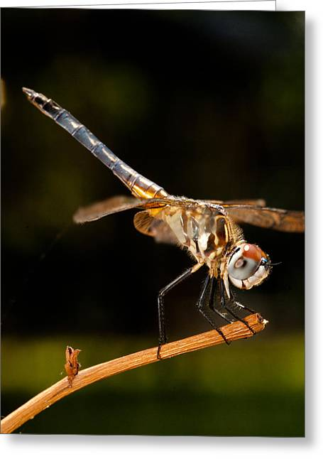 Christopher Holmes Greeting Cards - A Dragonfly Greeting Card by Christopher Holmes