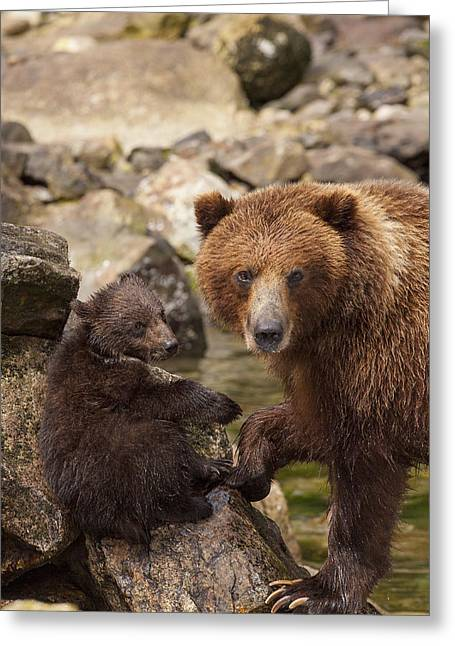Prints Of Alaska Greeting Cards - A Family Portrait Greeting Card by Tim Grams