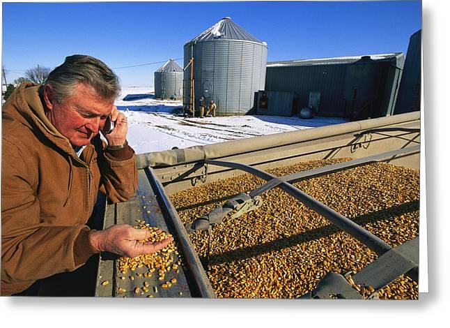Rural Snow Scenes Greeting Cards - A Farmer Runs His Corn Through His Hand Greeting Card by Joel Sartore