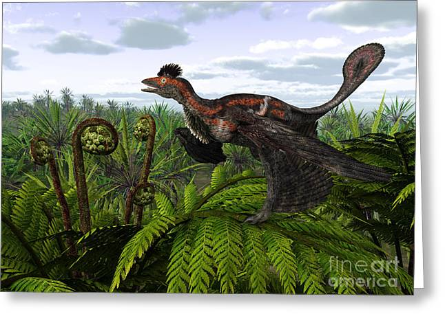 Dromaeosaurid Greeting Cards - A Feathered Microraptor Perched Atop Greeting Card by Walter Myers