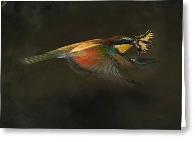 Butterfly Prey Greeting Cards - A Female Bee Eater Plucks A Butterfly Greeting Card by Joe Petersburger