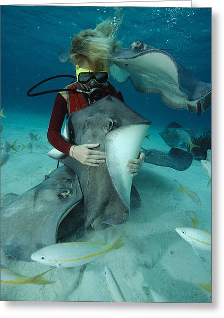 Southern Stingrays Greeting Cards - A Female Diver Strokes A Southern Greeting Card by David Doubilet