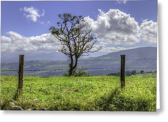 A Fence And A Tree 3552hdr Greeting Card by Sortarivs Arts